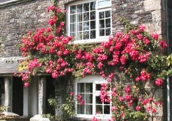 Tremaine Green Country Cottages  - Looe,