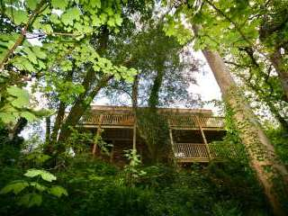 Sunridge TreeHouse - Devon
