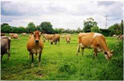 Bluegate Farm Holiday Cottages Leighton Buzzard Bedfordshire Home Counties England