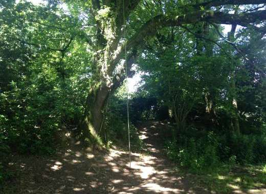 A great it with the children young and old, hour can be spent swinging away on the great oak tree