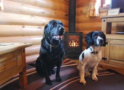 Pet Friendly Lodges