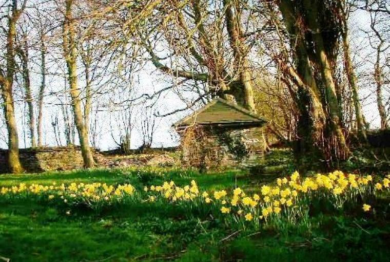 Spring time at Hafod Grove