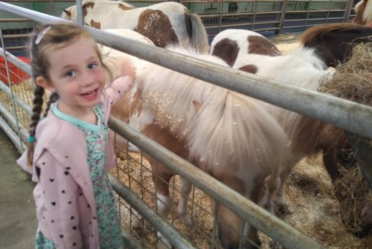 A day out at Folly Farm is fantastic for young children