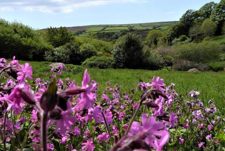 Dittiscombe Valley, South Devon