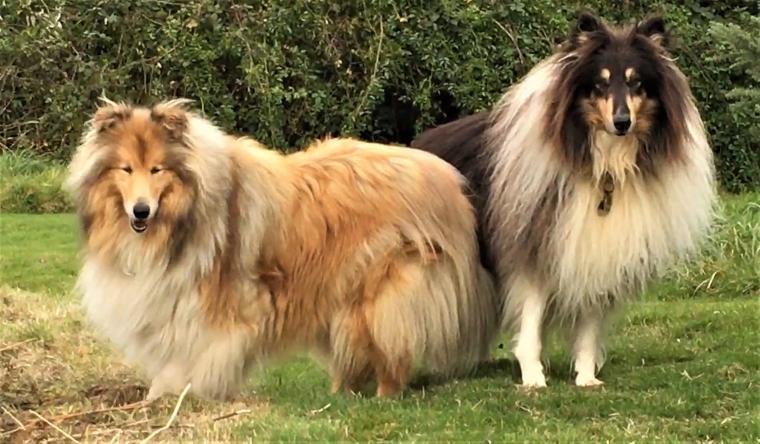 Dog friendly Dittiscombe Estate & Cottages in South Devon