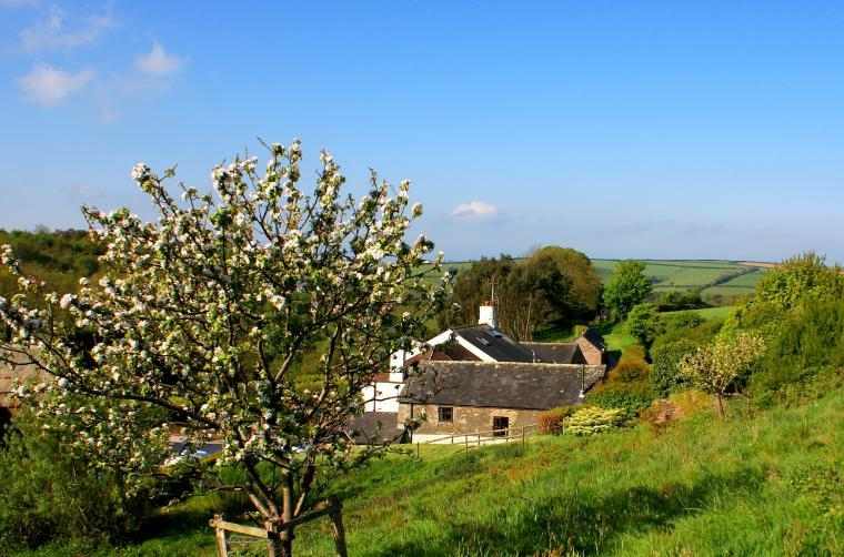 Orchard and Dovecote Cottage at Dittiscombe Hills Estate