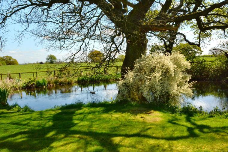 The beautiful wildlife pond