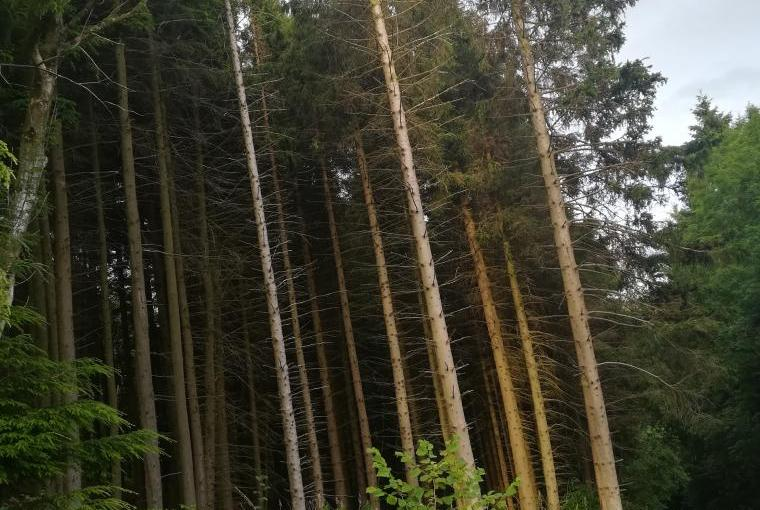 Over 20 acres of forestry....exclusively for our guests!!