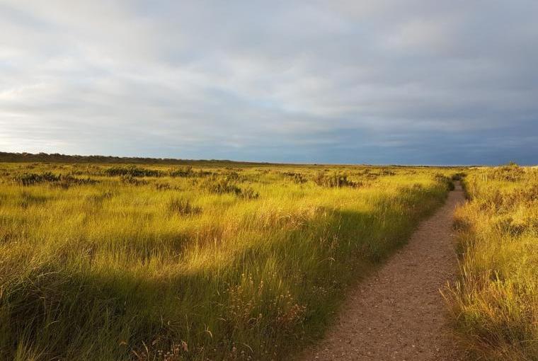 Norfolk Coastal Path at Holme