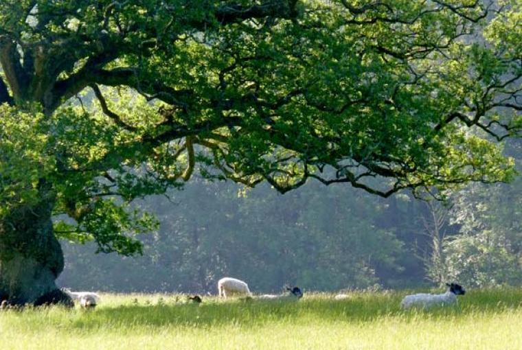 Nearby fields and farmlands