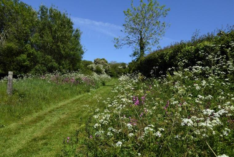 Nature trail at Dittiscombe Hills Estate & Cottages