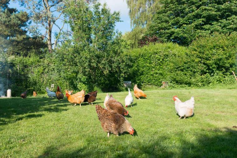 Dons Barn, Suffolk, Photo 24