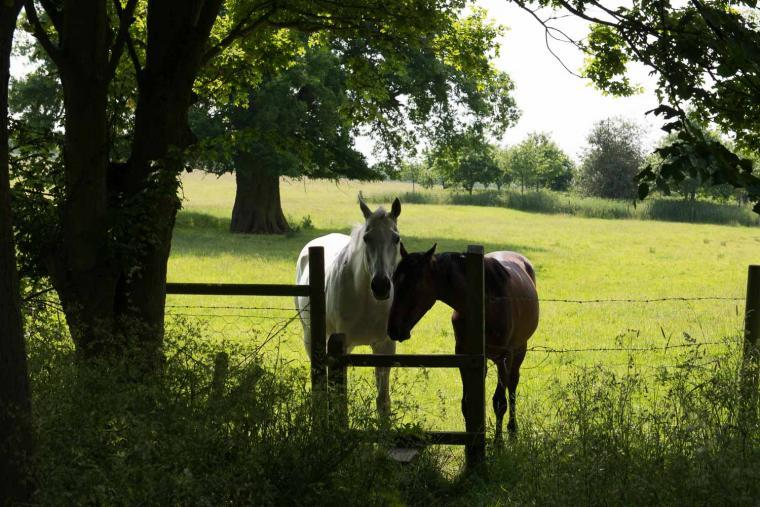 The Stables, Suffolk, Photo 17