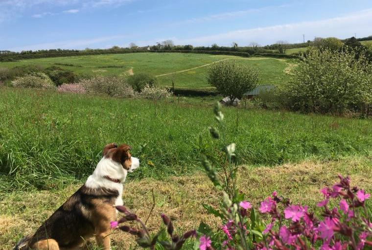Dog friendly Dittiscombe Hills Estate & Cottages