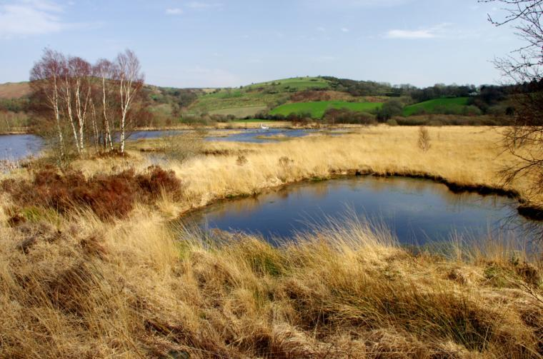 Nearby Nature Reserve (Cors Caron)