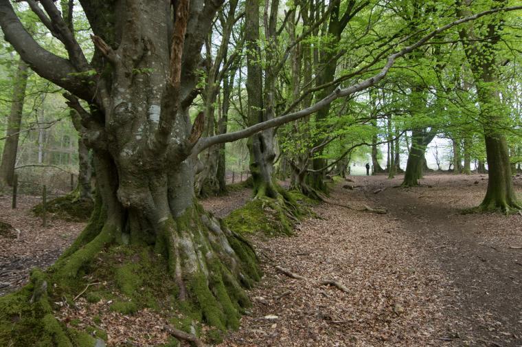 Long Wood walks near Lampeter