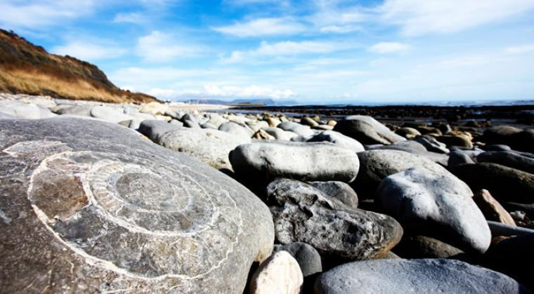 Find Fossils On Both North And South Coasts