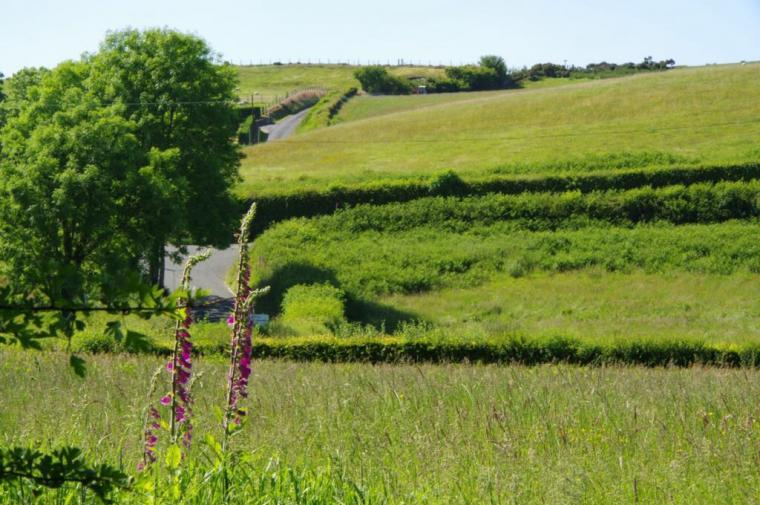 Fields Behind Rhoslwyn