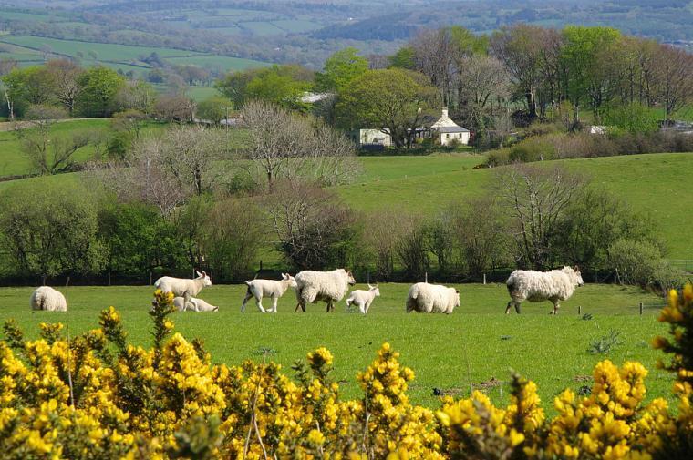 Rhoslwyn taken from ridge walk