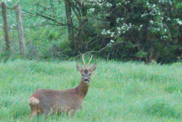 Wildlife in & around Pheasant Lodge