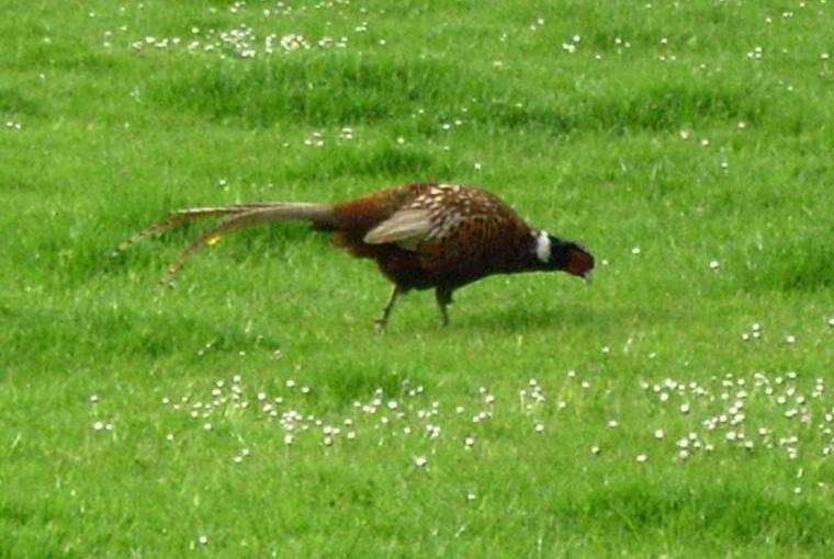 Visitors to Pheasant Lodge