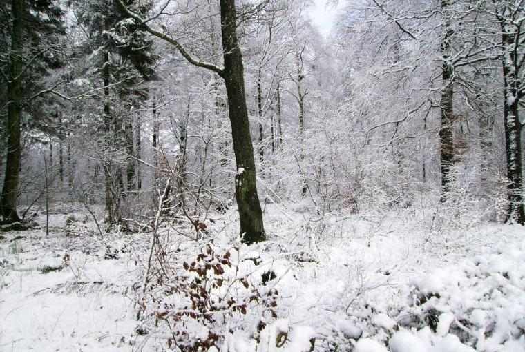 winter woodland close to Pheasant Lodge