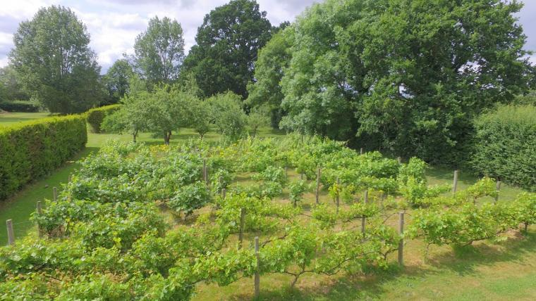 The Cotswold Manor Vineyard, Exclusive Hot-Tub, Games Barn, 70 acres of Parkland, Oxfordshire, Photo 14