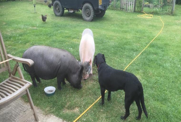 Animals-On-The-Farm