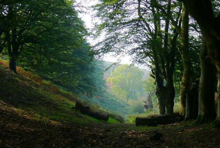 Discover scenic countryside nearby