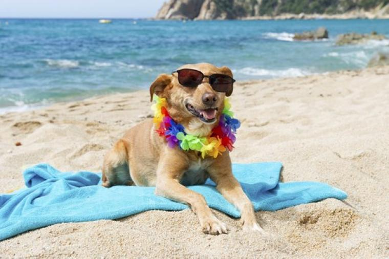 Some Beaches In The Area Allow Dogs All Year Round