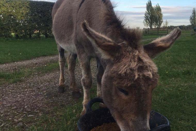 Donkey Feeding Time