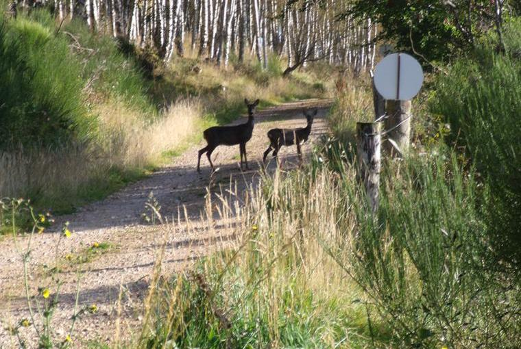 Local residents