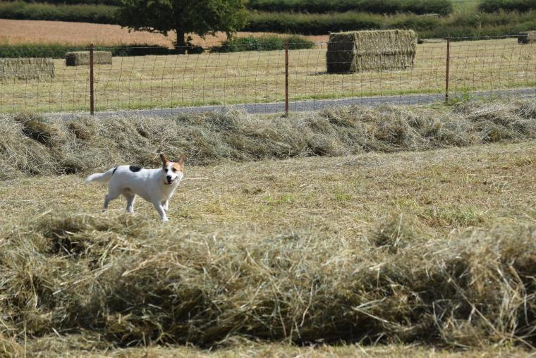 Timmy enjoys haymaking time