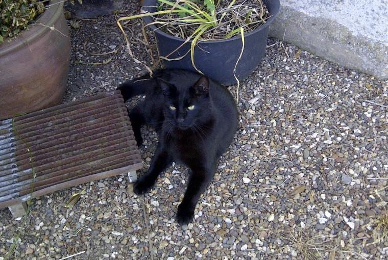 Tommy the three legged cat lives at Holme Wold