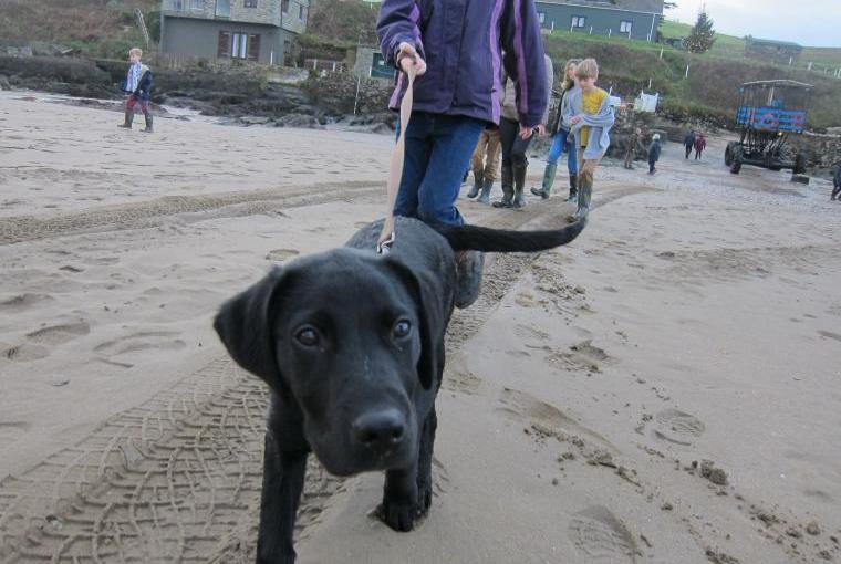 Alfie at Bigbury (20 mins from Lodge)