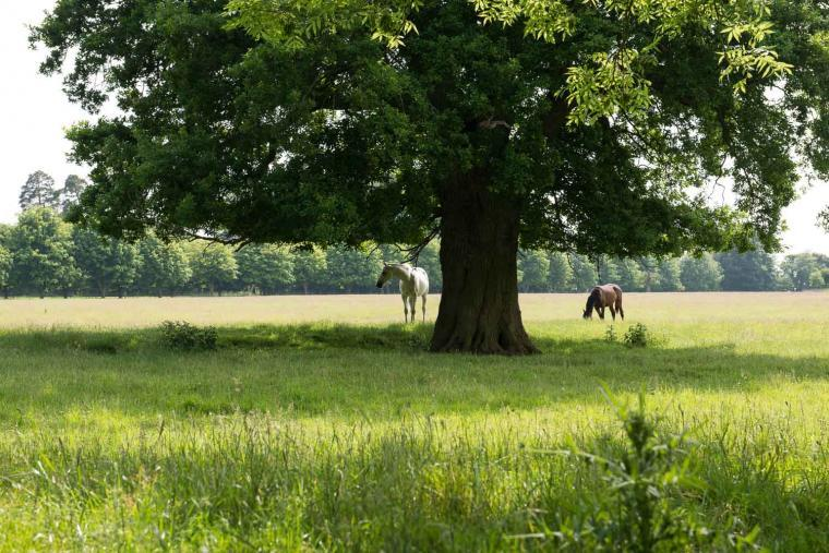 Explore Suffolk on holiday