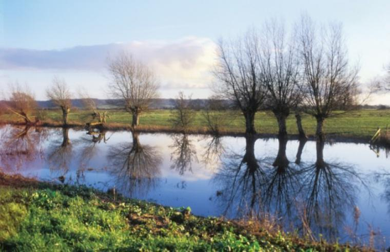 Explore the Somerset Levels and the many bird sancturies