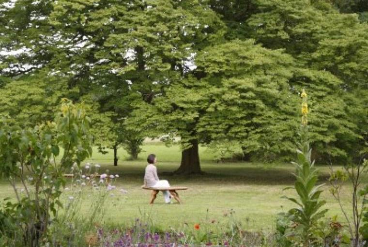 Rare trees at Cossington Park and plenty of space to relax