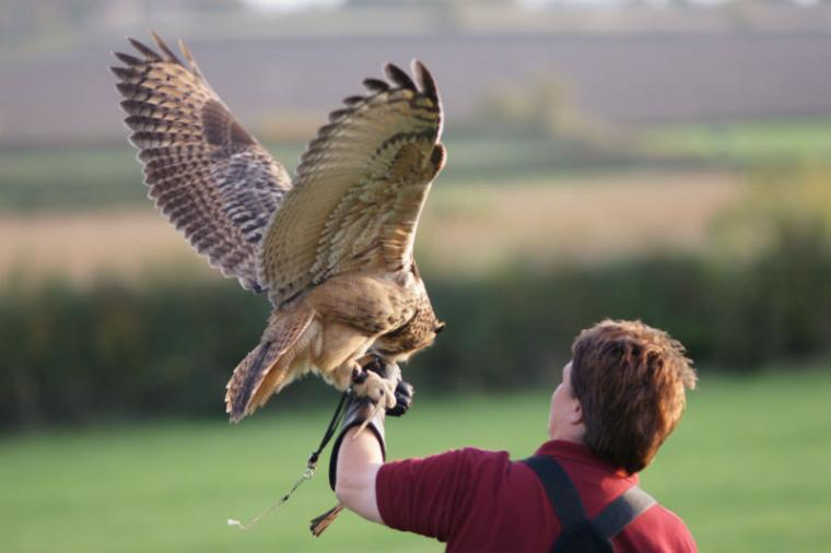 Falconry at Cossington Park