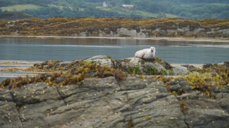 Mama Seal