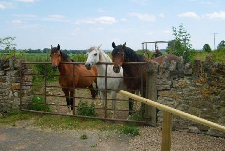 Old Sheep Shed Rural Retreat near Shrewsbury, Cheshire, Photo 12