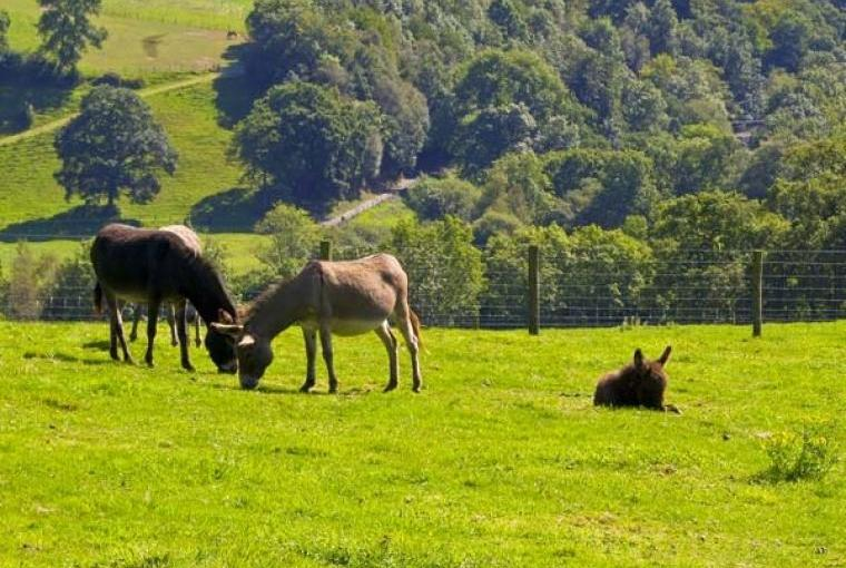 Discover some of the best of Ceredigion on holiday