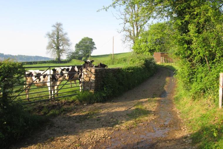 Stroll down country lanes