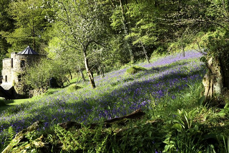 Dovecote Wales in Penallt Bluebells