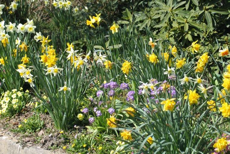 A Succession of Spring Flowers at Acorn Retreat