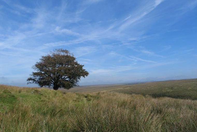 Explore the wilds of Exmoor