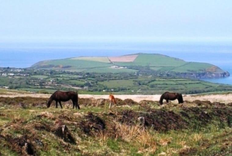 Ponies on the Preselis looking towards Dinas Head