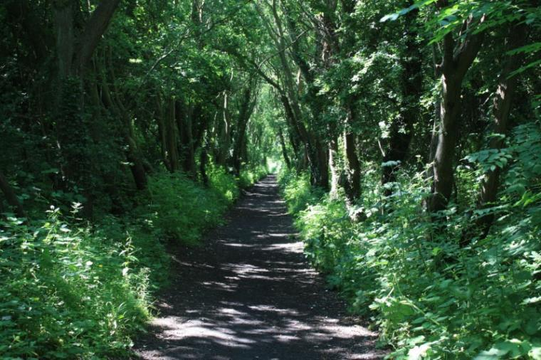 Cycle or walk along the disused railway tracy to Ravenscar