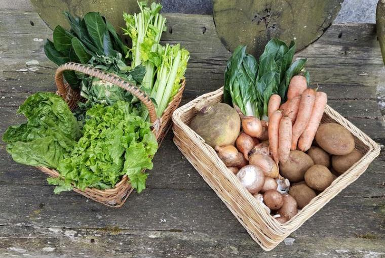 Local-Organic-Vegetables-Farm-Shop
