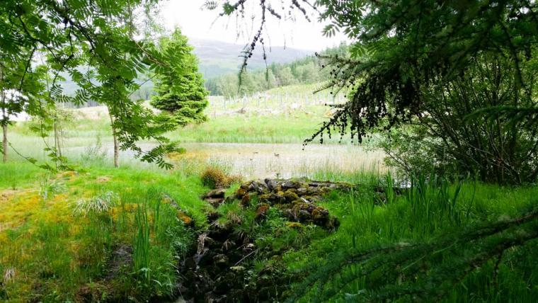 This view is looking over our lochan - which we share with our lovely neighbours